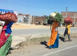 India 0564 (1)