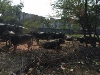 india_9905 (1)